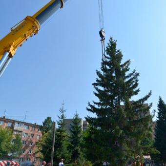 Услуги автокрана 400 тонн при пересадке дерева